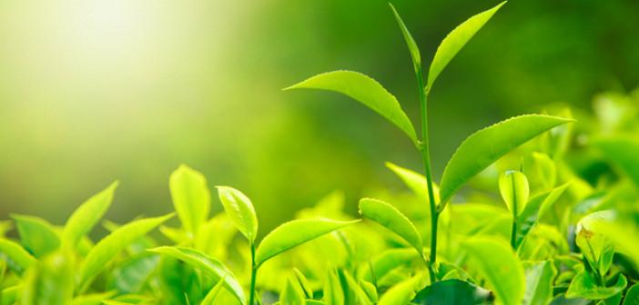 Should You Go Organic The Daily Tea