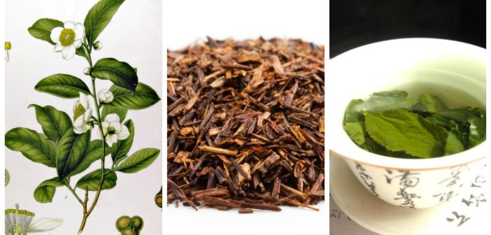 The Superfood known as tea
