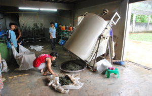 Oolong_manufacturing_1