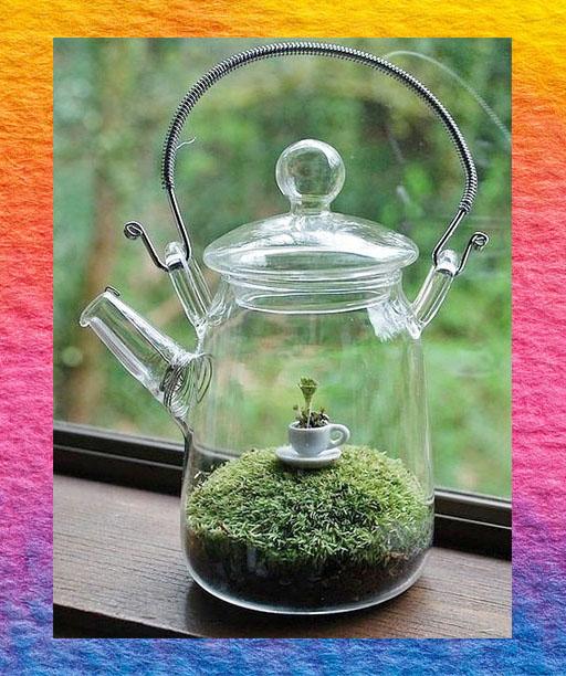 Teapot Terrarium