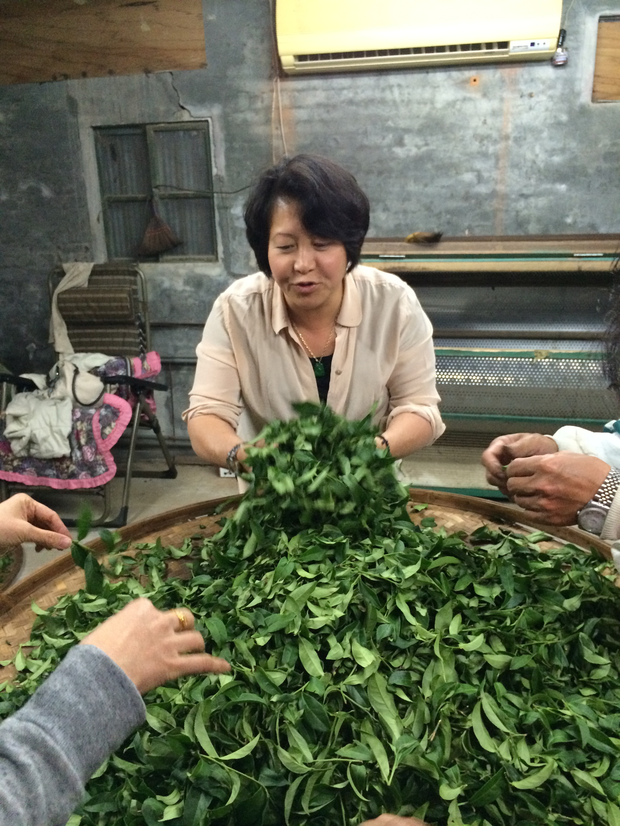 Curating Oolong Tes 3