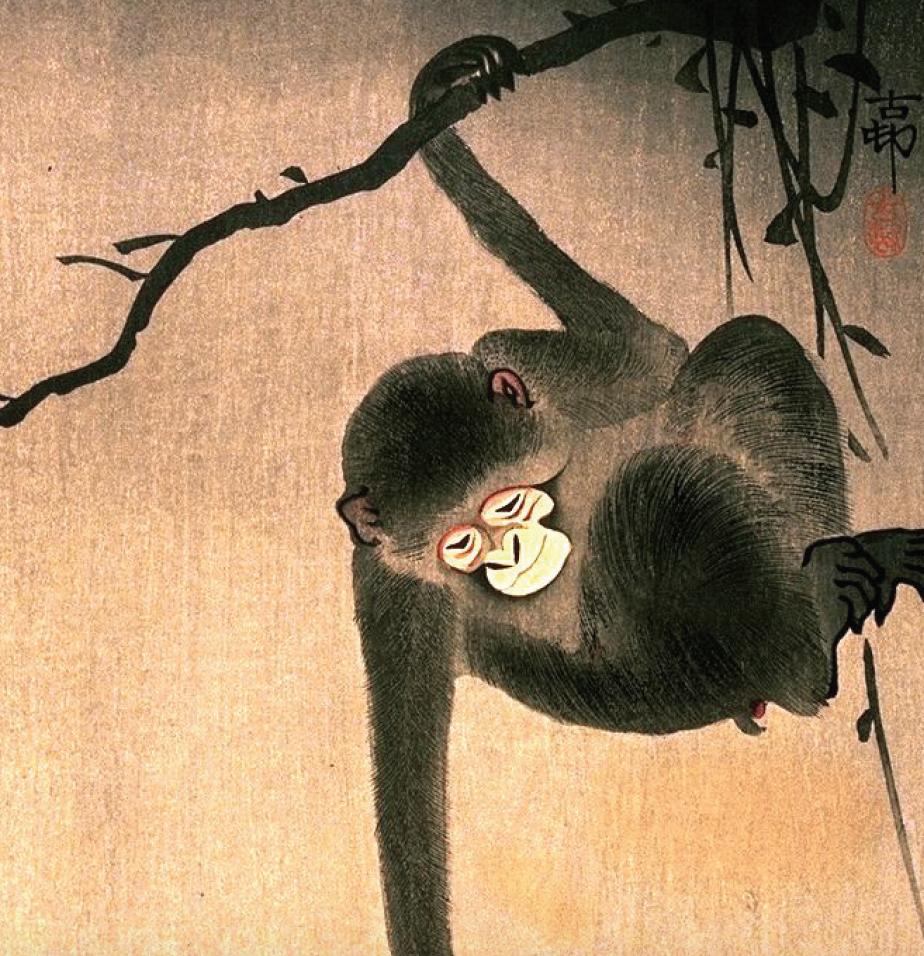 monkey picked tie guan yin